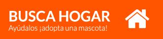 busco_hogar